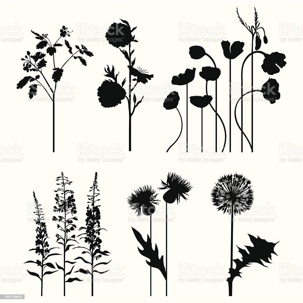 Plant's set vector art illustration