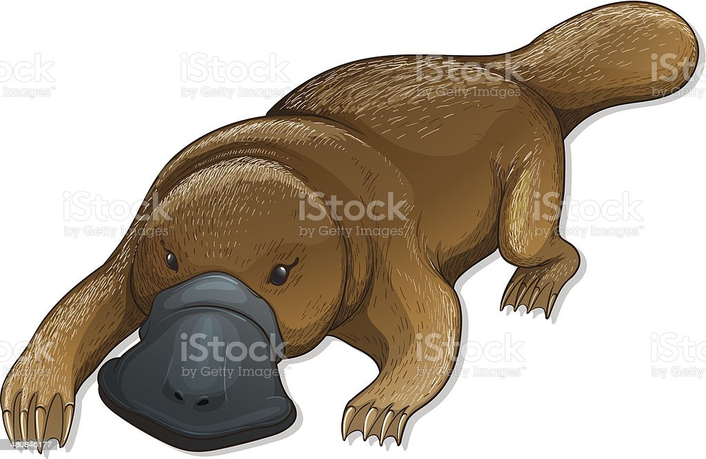 Platypus vector art illustration