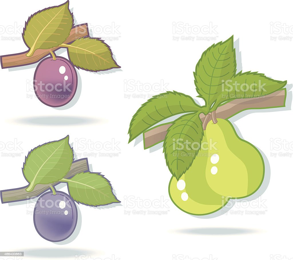 Plum- and Peartwigs. vector art illustration