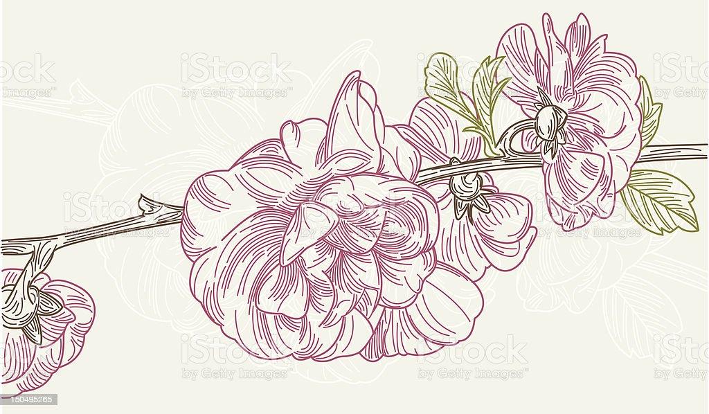 Plum Blossoms - Line Art royalty-free stock vector art