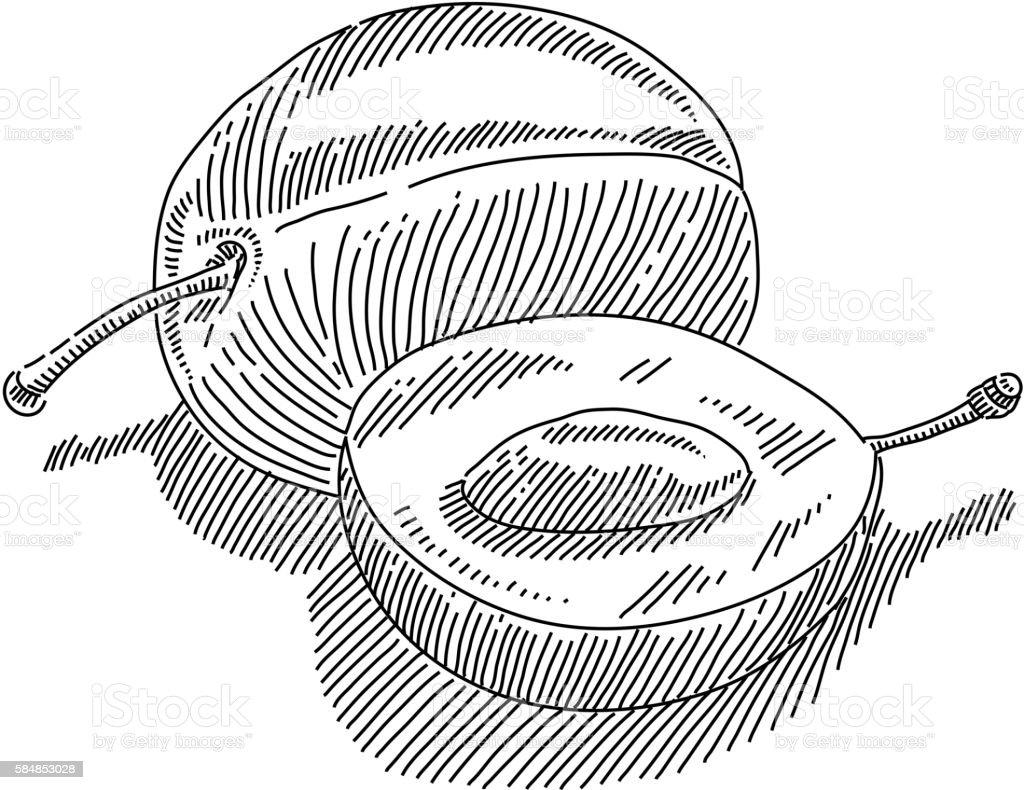 Plum Drawing vector art illustration