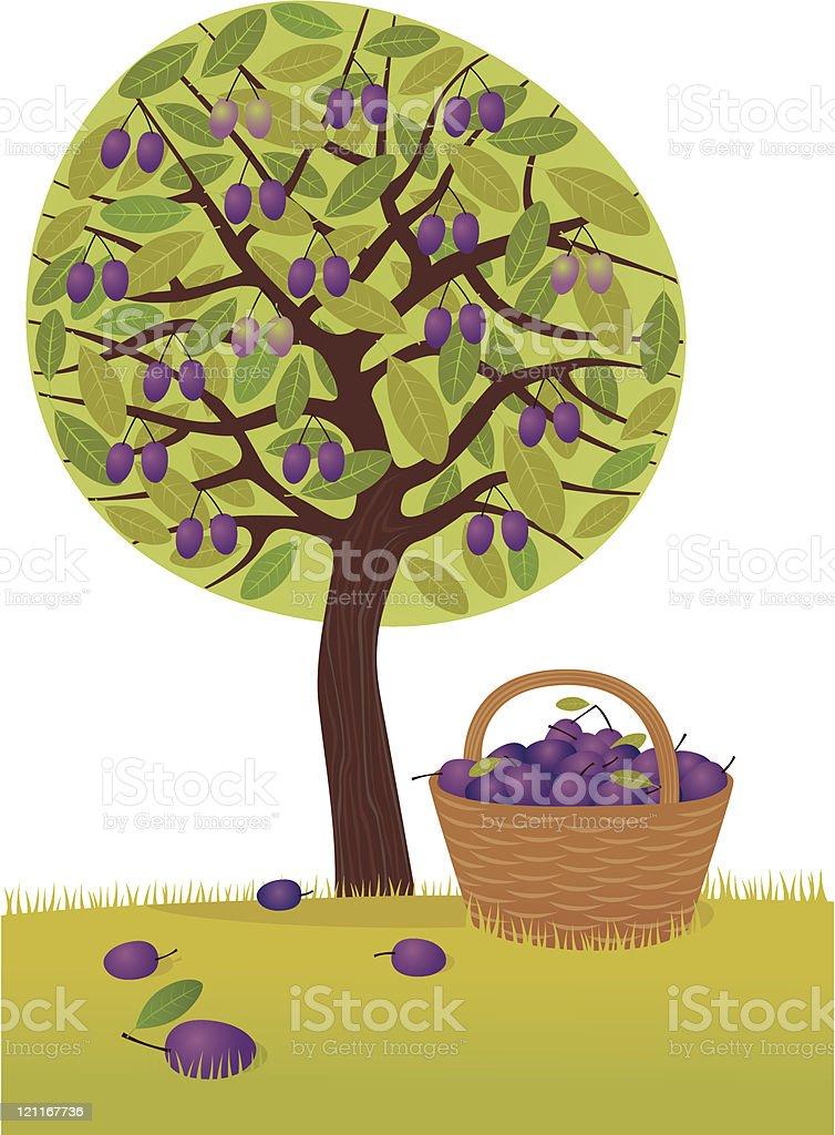 Plum harvest royalty-free stock vector art