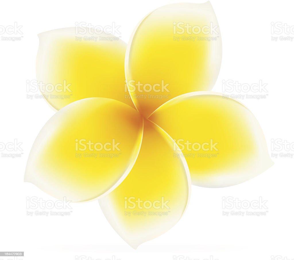 Plumeria / Frangipani - Asian yellow, white flower.  Isolated vector vector art illustration