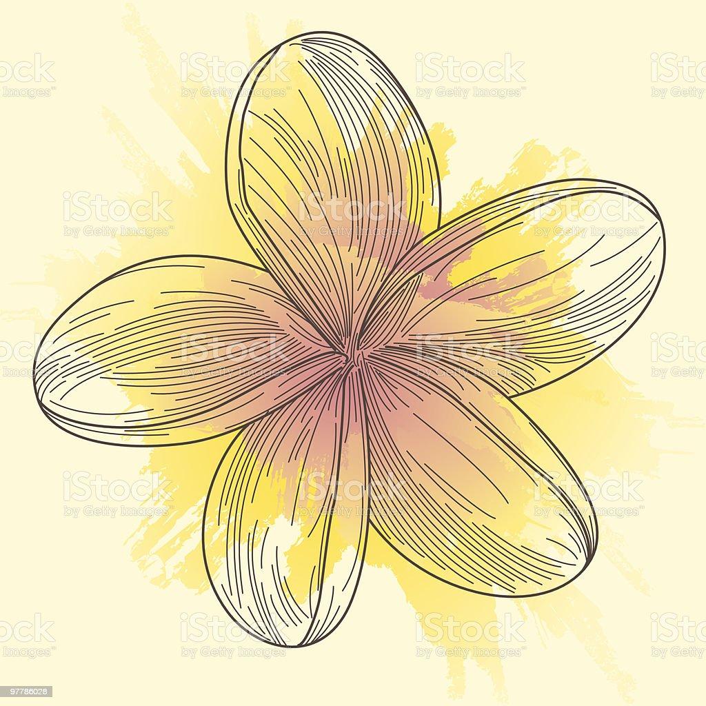 Plumeria - Frangipani Line Art vector art illustration