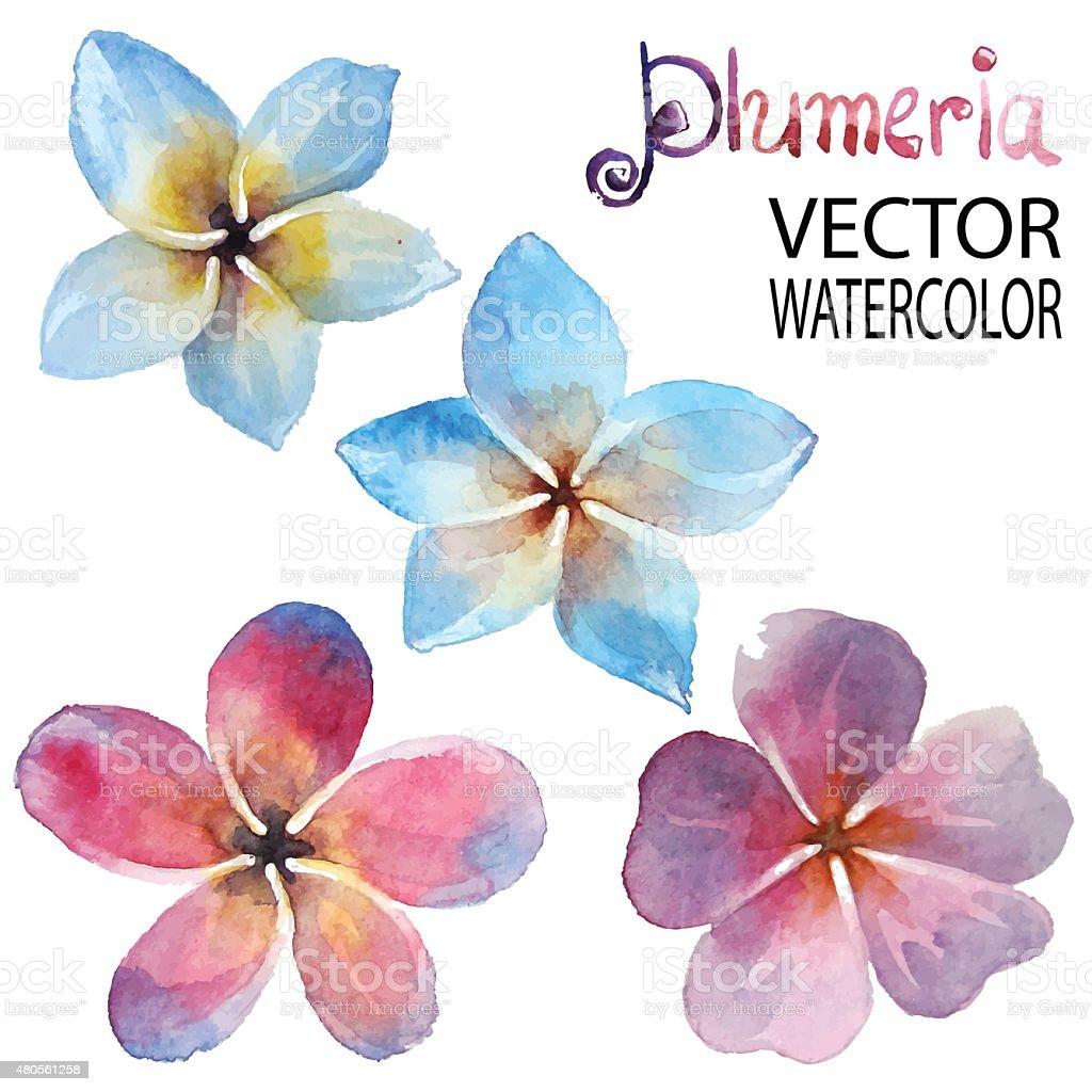 Plumeria vector art illustration