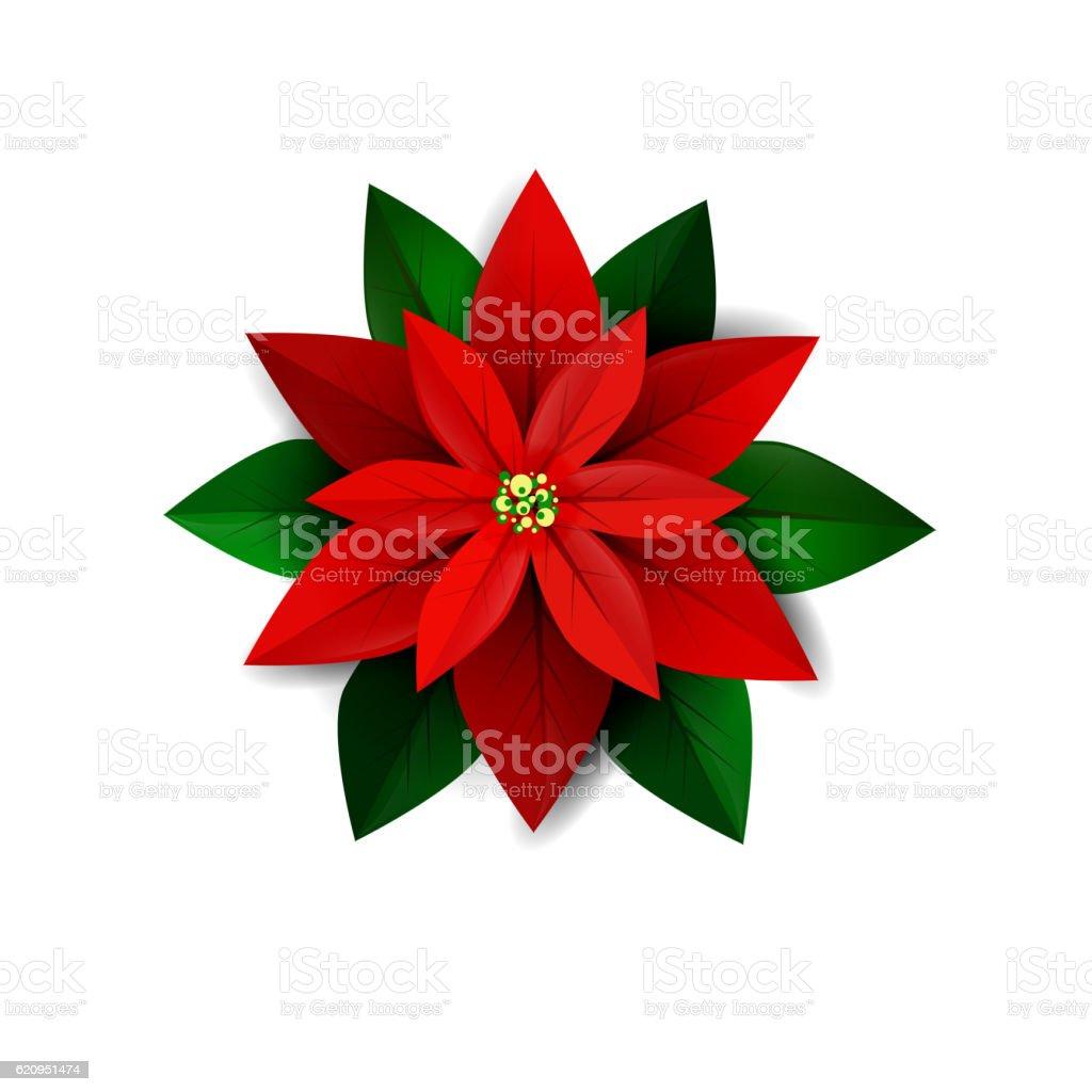 Poinsettia flower, symbol of Christmas vector art illustration