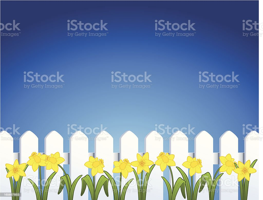 Pointed White Vinyl Fence and Daffodils royalty-free stock vector art