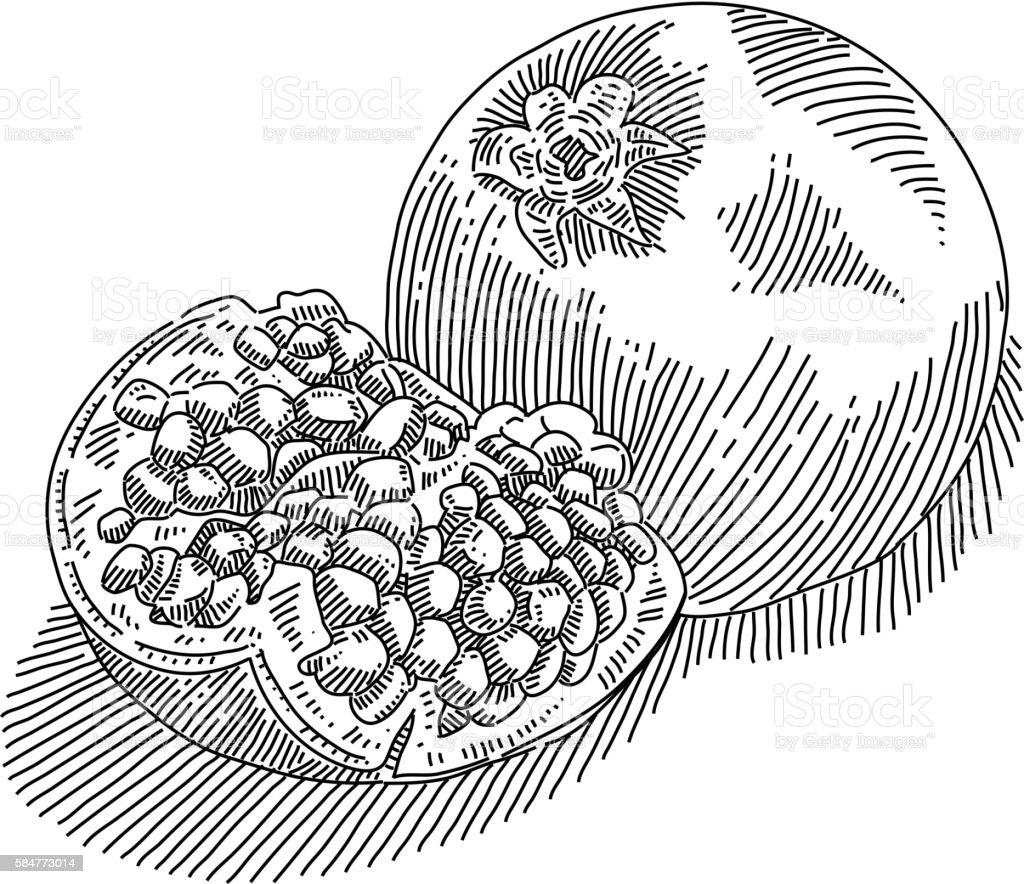 Pomegranate Drawing vector art illustration
