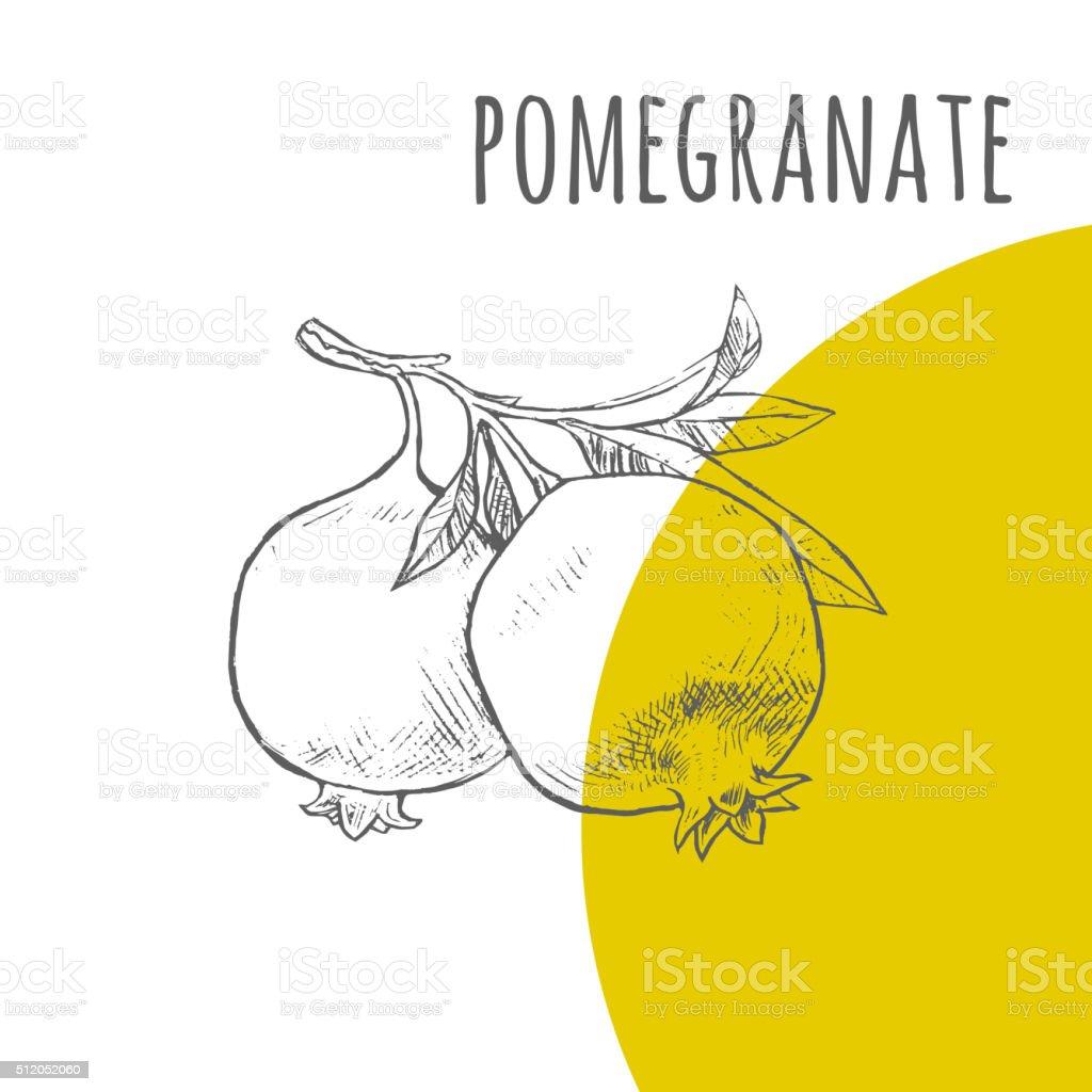 Pomegranate vector freehand pencil drawn sketch vector art illustration