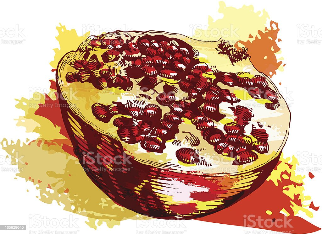 Pomegranate royalty-free stock vector art