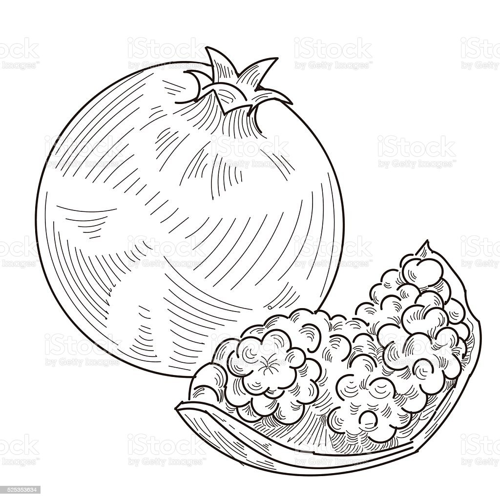 Pomegranate vector art illustration
