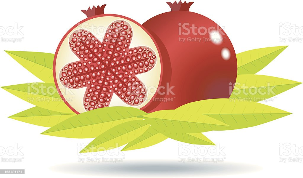 Pomegranate with leafs. vector art illustration