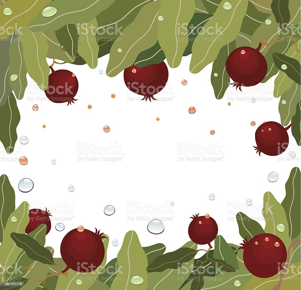 Pomegranates On Branch With Drops royalty-free stock vector art