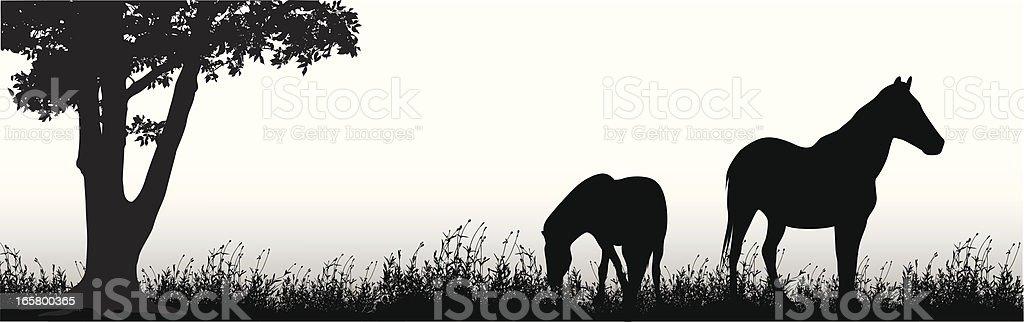 Ponies Vector Silhouette vector art illustration