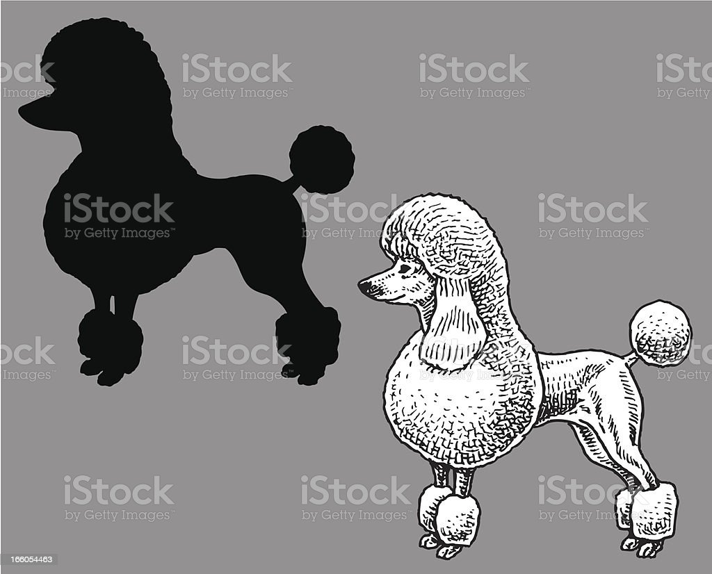 Poodle - Dog, domestic pet royalty-free stock vector art