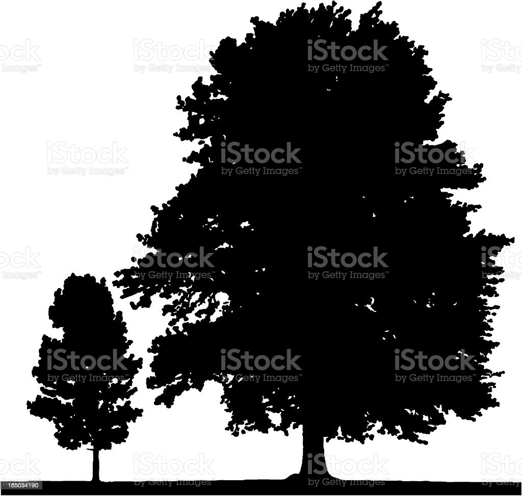 Poplar trees, VECTOR vector art illustration
