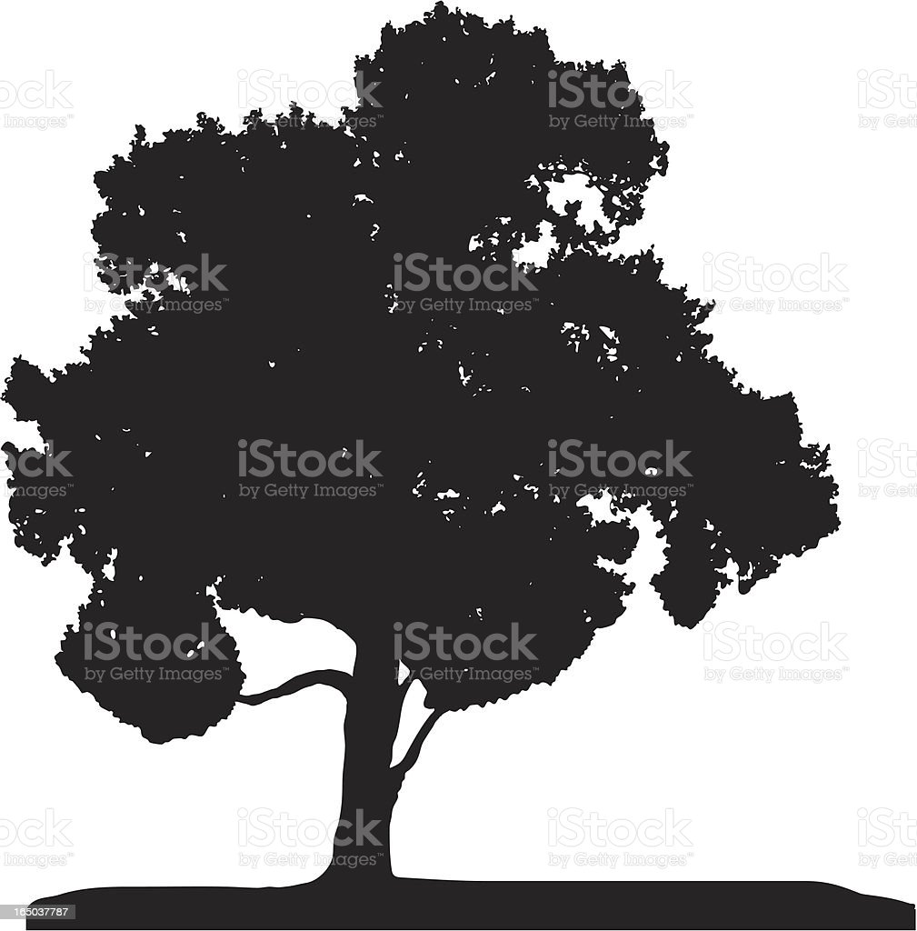 Poplar, Vector vector art illustration