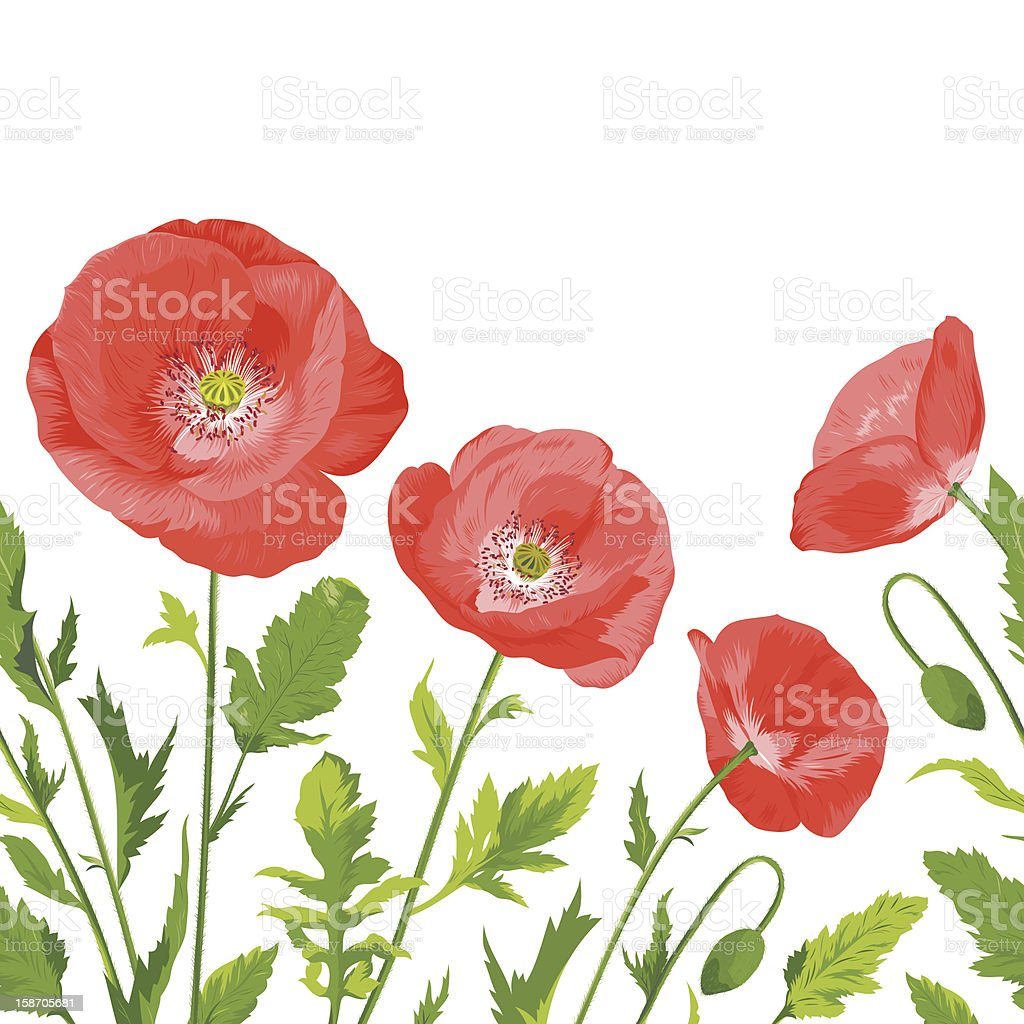 Poppies bouquet, seamless border composition royalty-free stock vector art