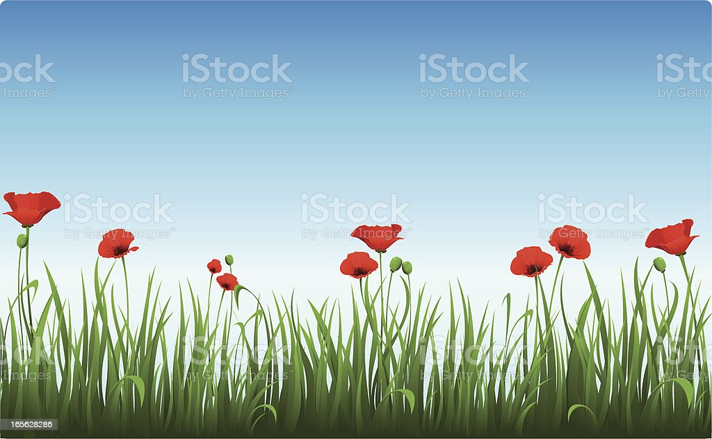 Poppies in the clear morning sky vector art illustration