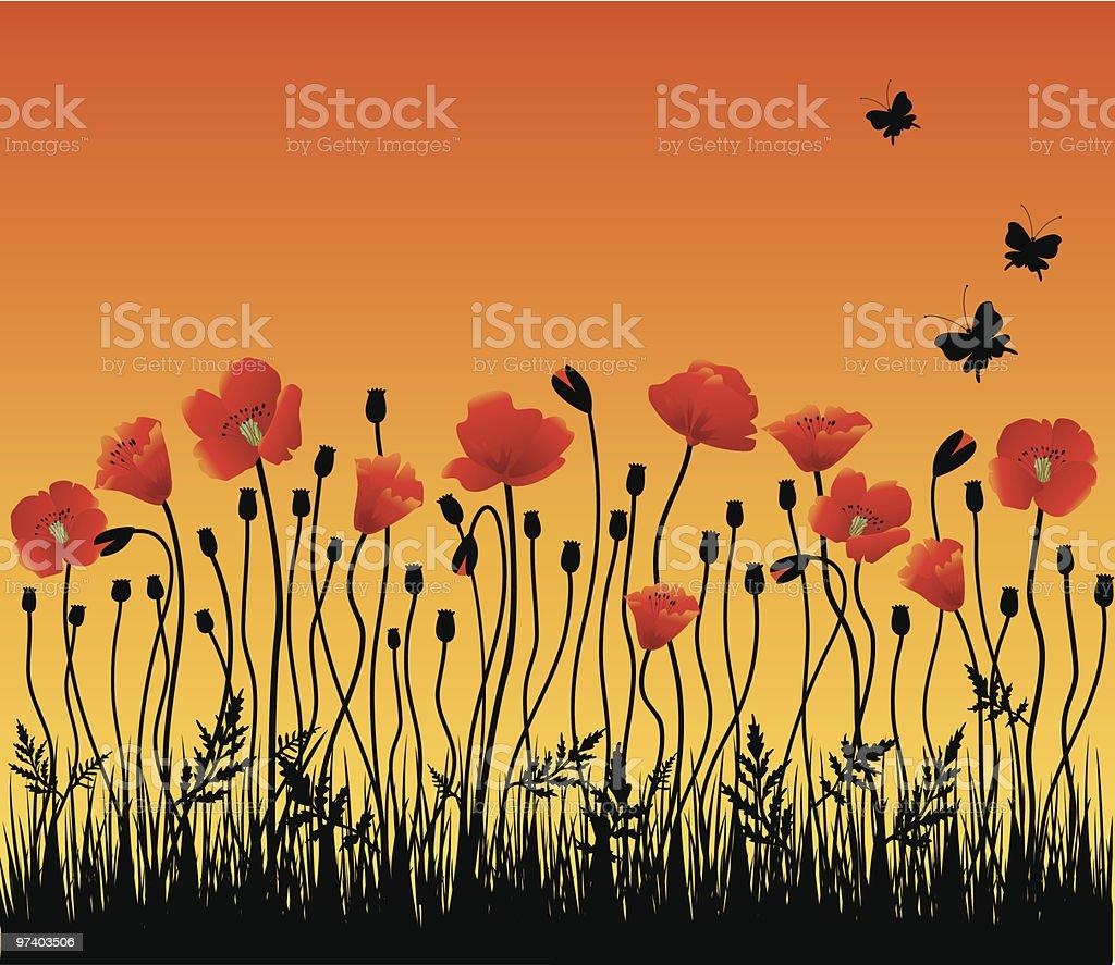 Poppies in the morning vector art illustration