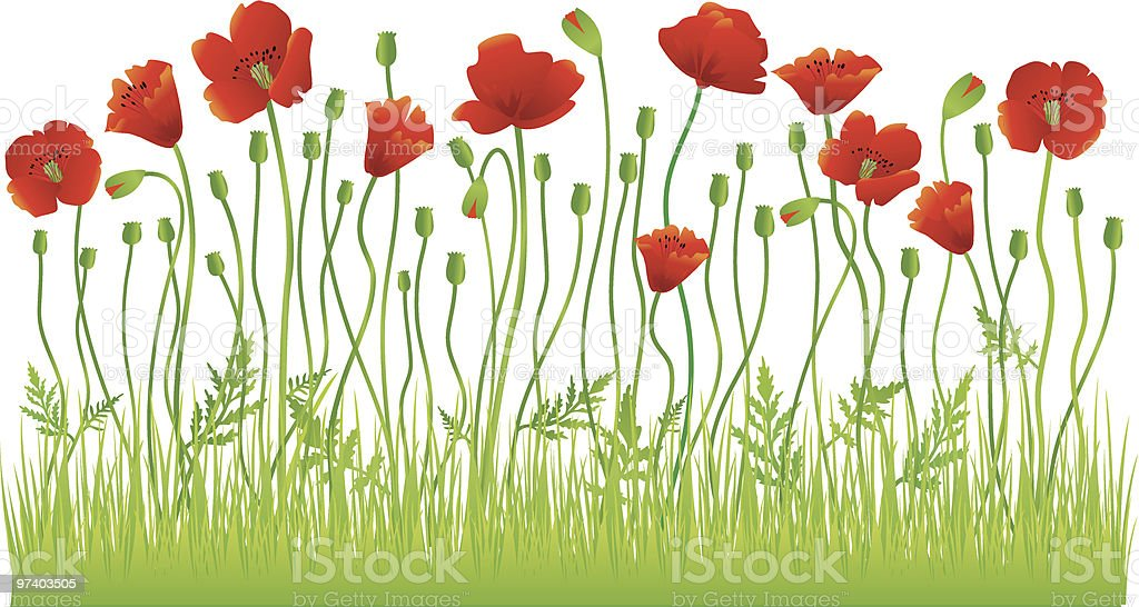 Poppy field vector art illustration