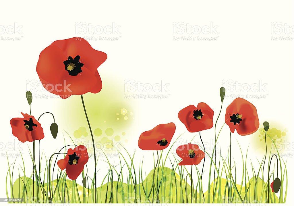 poppy field, vector illustration vector art illustration