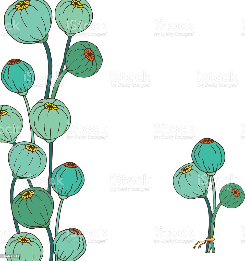 Poppy flower heads, seeds. Hand drawn illustration vector art illustration