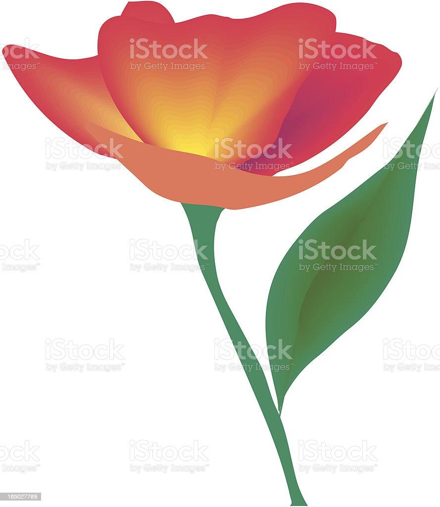 Poppy flower royalty-free stock vector art