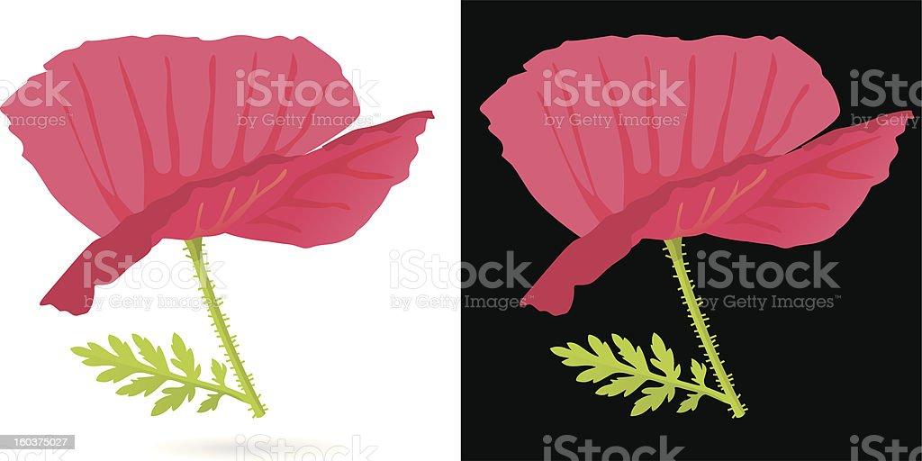 Poppy Flower with Black/White Background. royalty-free stock vector art