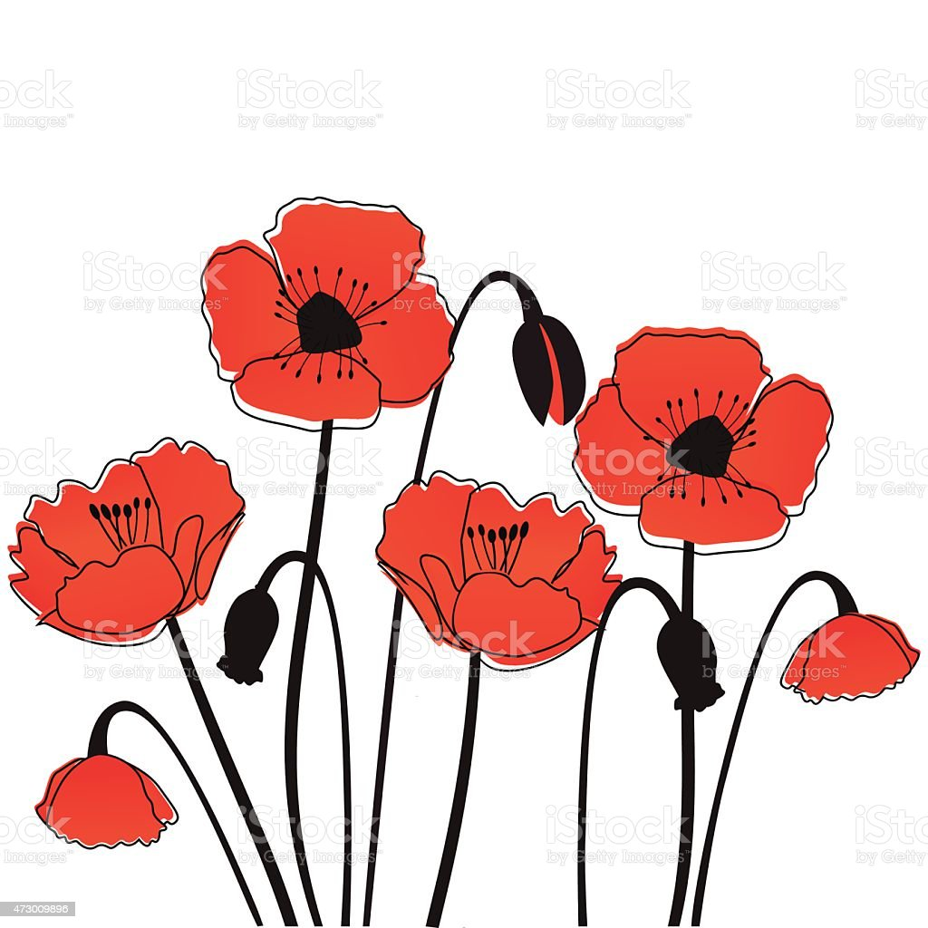 Poppy flowers vector art illustration