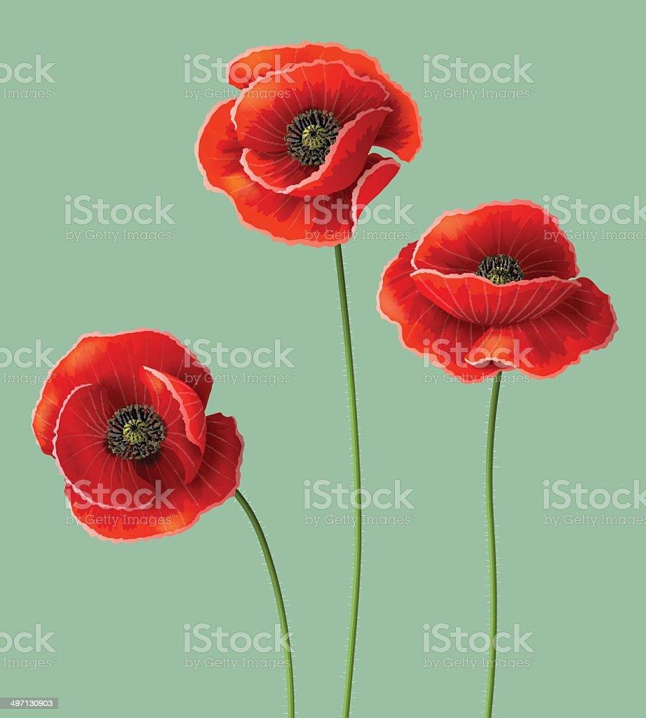 Poppy flowers. vector art illustration
