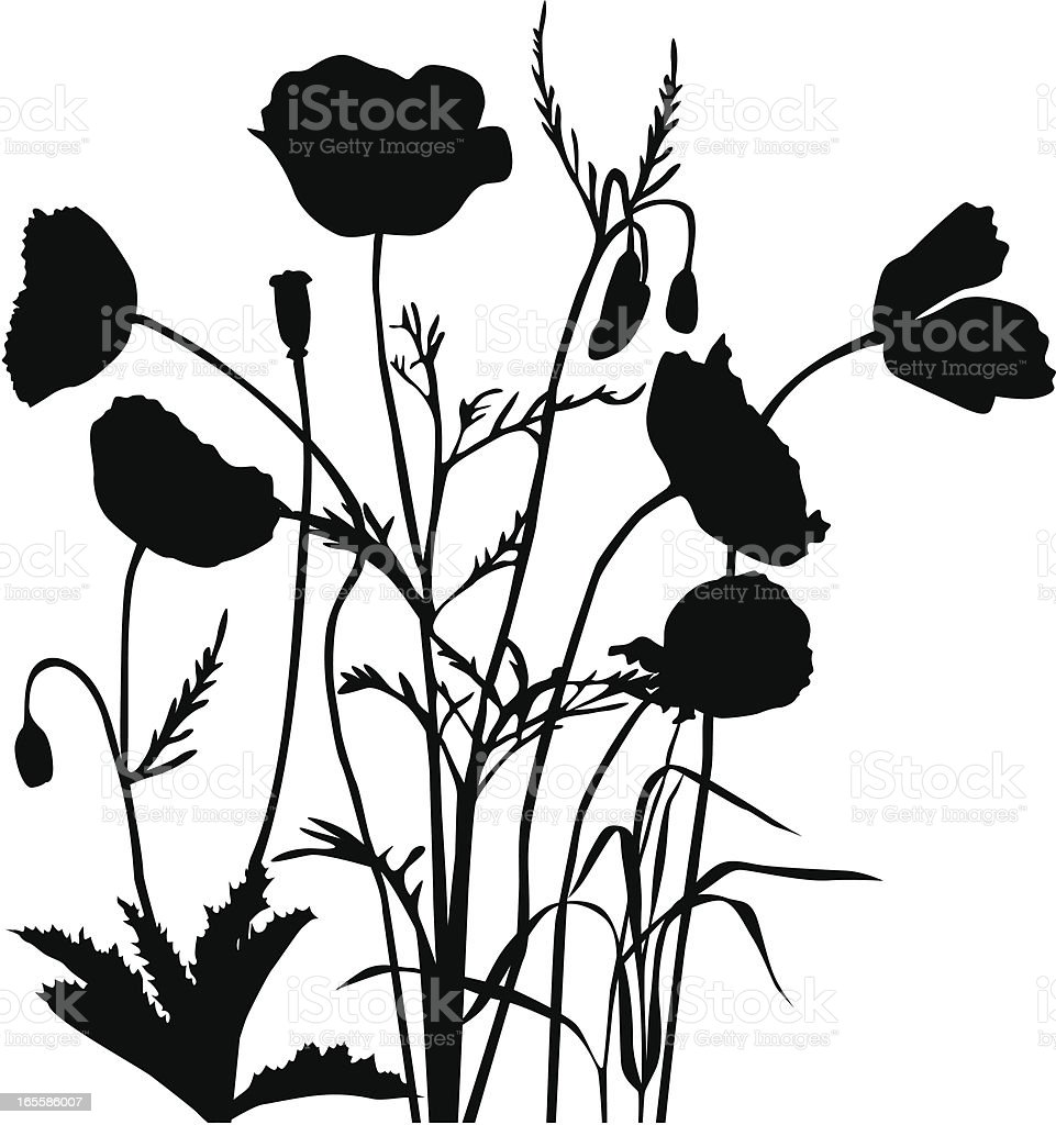 Poppy group royalty-free stock vector art