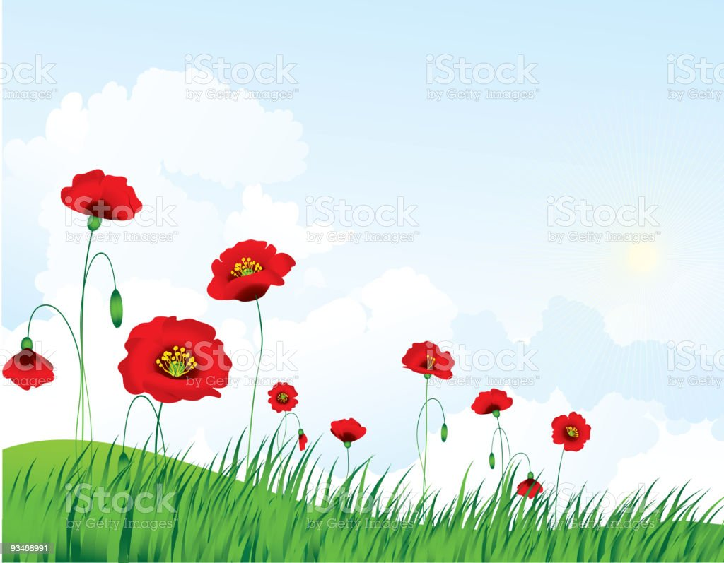 Poppy landscape vector art illustration