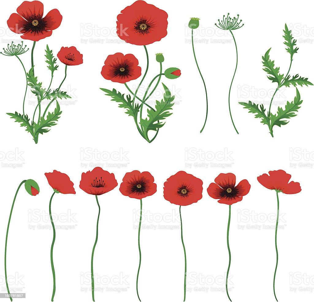 Poppy vector art illustration