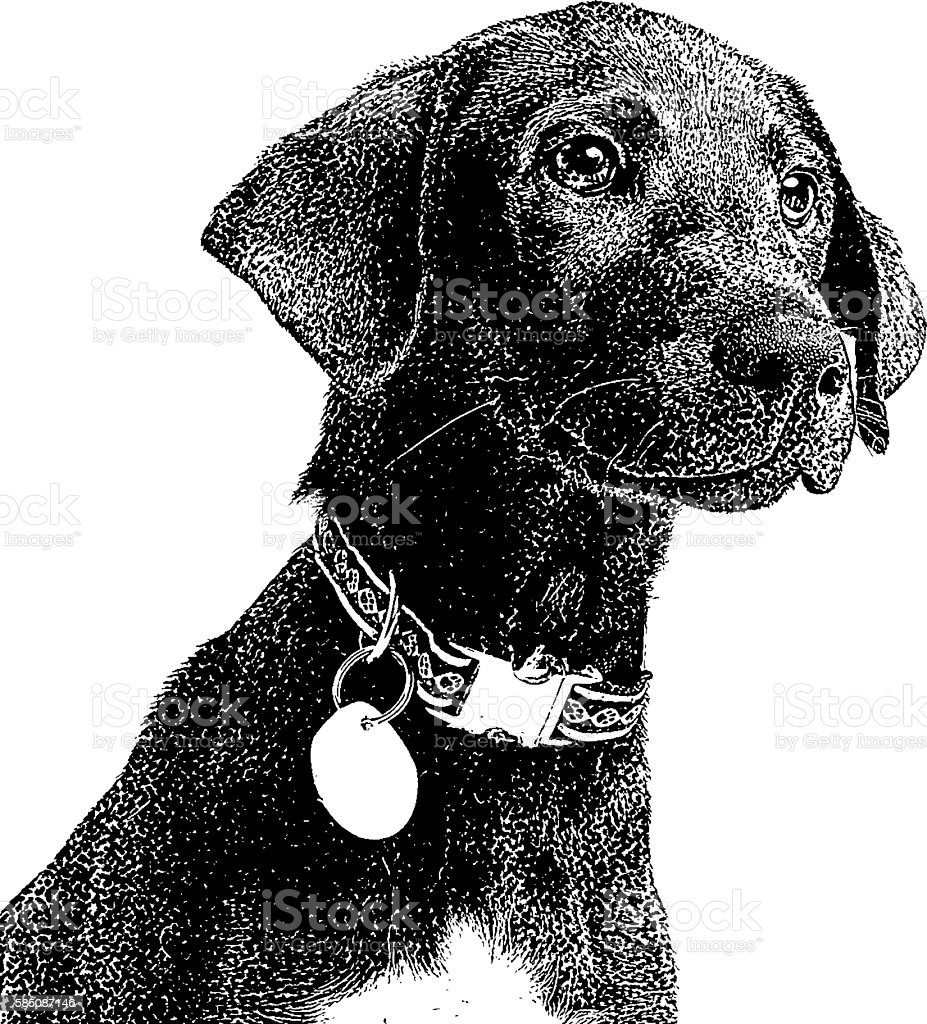 Portrait of a cute black puppy vector art illustration