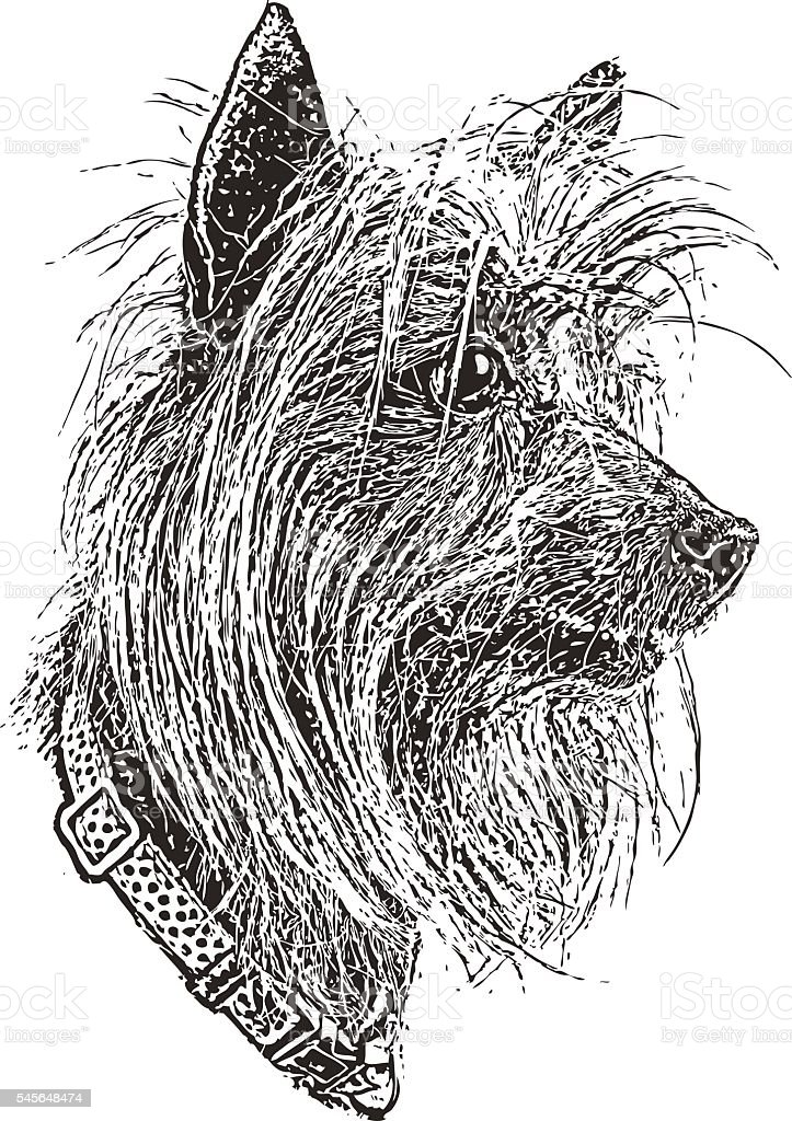 Portrait of a Silky Terrier and Dachshund Mixed Dog vector art illustration