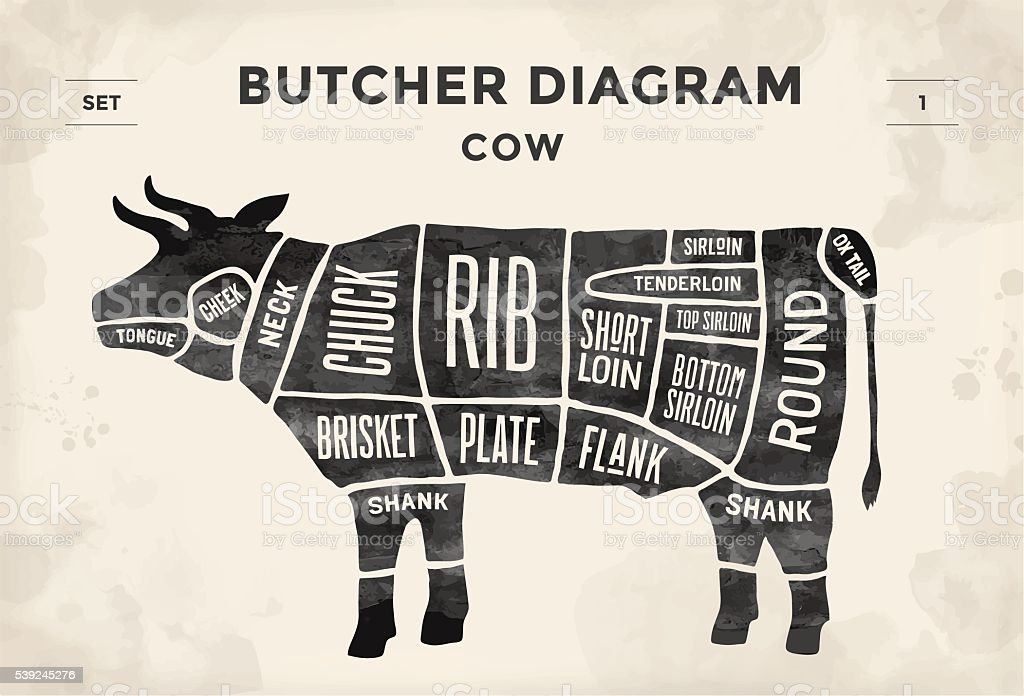 Poster Butcher diagram and scheme - Cow vector art illustration