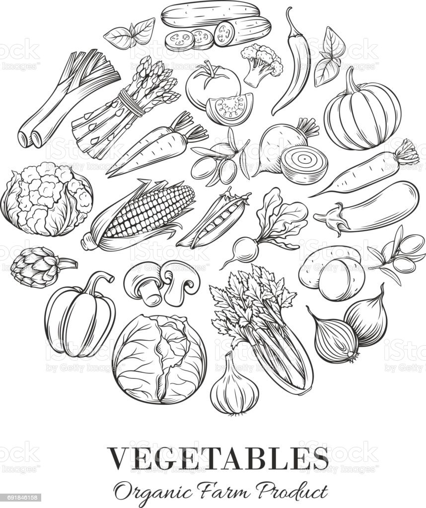 Poster round composition with hand drawn vegetable vector art illustration