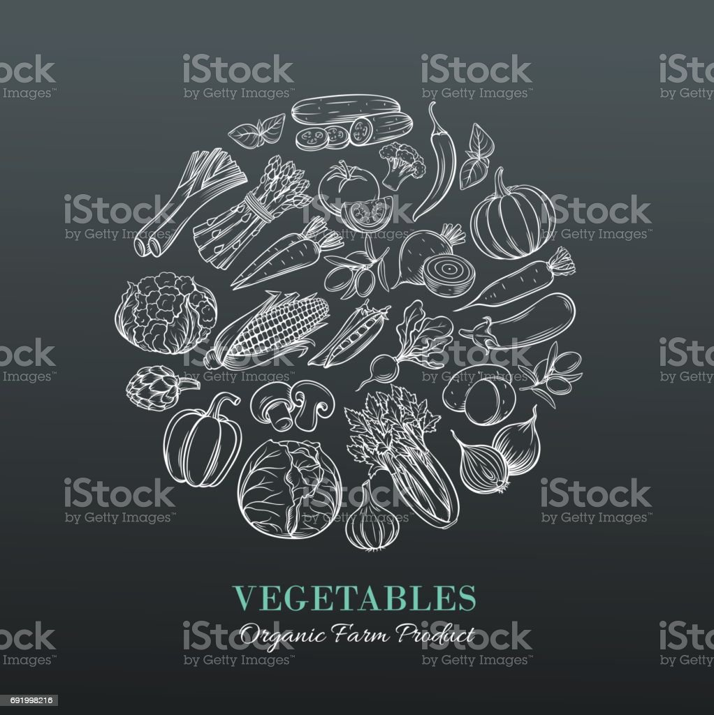 Poster with hand drawn vegetables vector art illustration