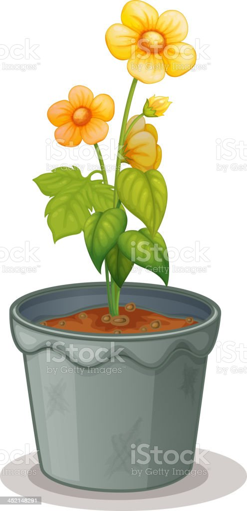 Pot plant royalty-free stock vector art