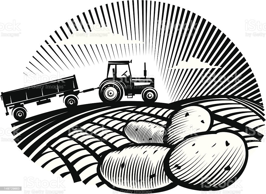 Potato against farm tractor in a field vector art illustration