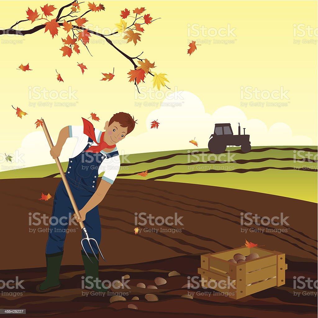 Potato Harvest vector art illustration