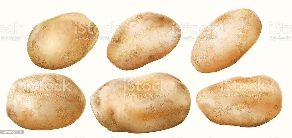 potato tubers on a white background vector art illustration