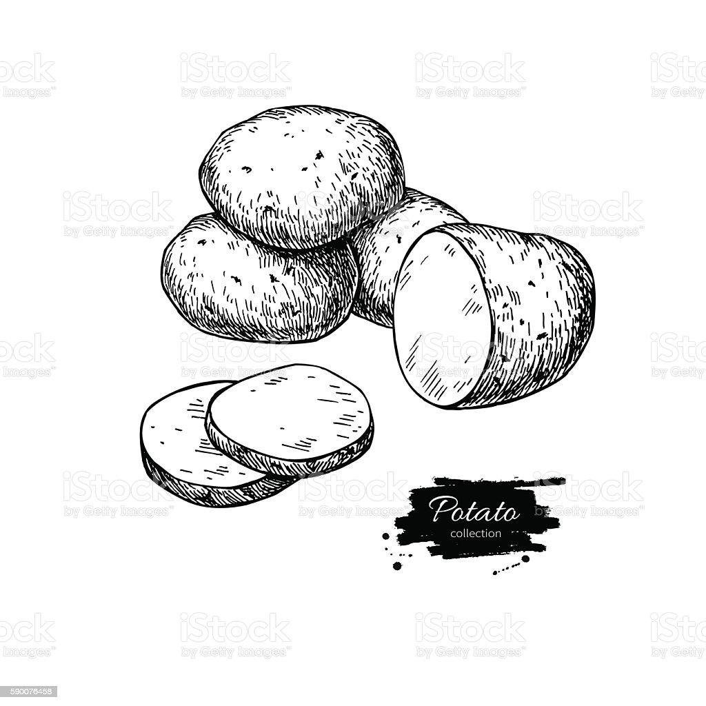 Potato vector drawing. Isolated potatoes heap and sliced piece. vector art illustration