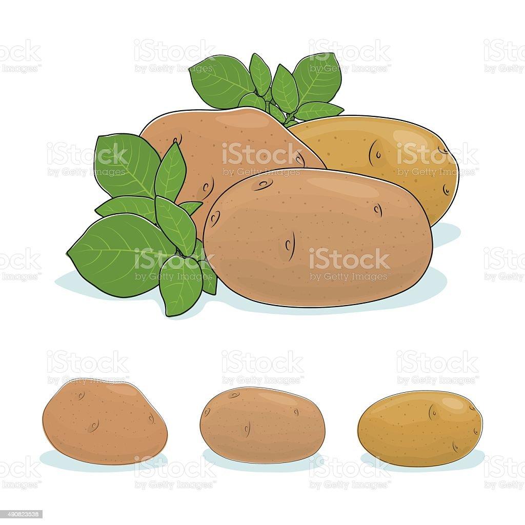 Potato Vegetable, Edible Fruit vector art illustration