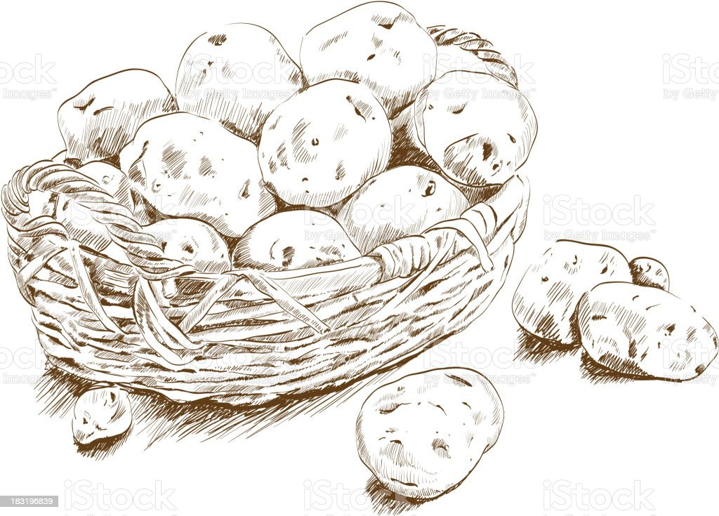 potatoes in a basket vector art illustration