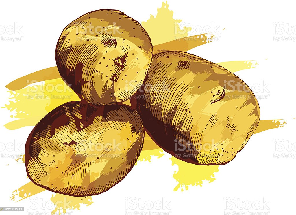 Potatoes vector art illustration