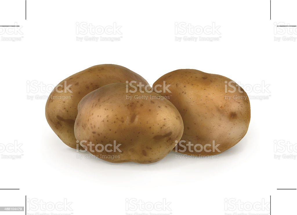Potatoes vector art illustration