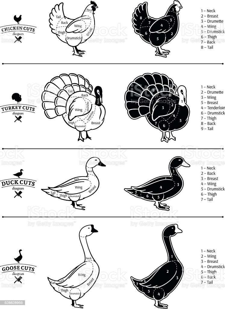 Poultry Cuts Diagrams vector art illustration