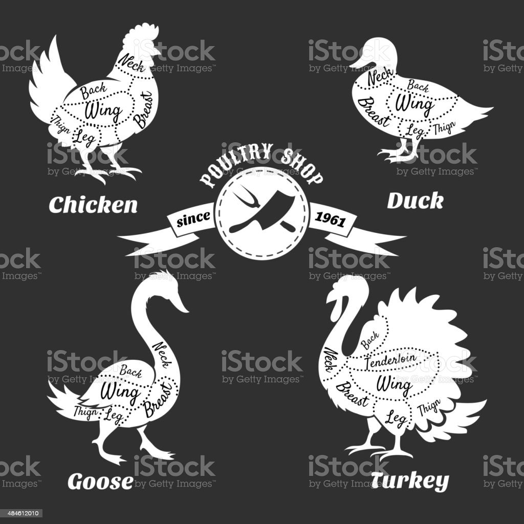 Poultry cuts poster. Chicken and duck, goose turkey vector art illustration